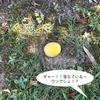 5-71   2020年の梅の悲劇!?