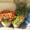 ディズニーシーのお花たち(4月)