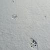 雪 獣の跡 隠遁所探し