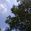 梅雨の晴れ間は2