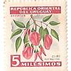 ウルグアイ東方共和国 セイボ 5ミレシモ