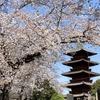 池上周辺の桜いろいろ2021年(番外編)