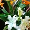 カウンターの花(9)