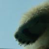 上野動物園は赤ちゃんの時から何度も行きたいスポット