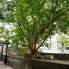 SONY FE 24mm F1.4 GM ~ 試し撮り「神戸北野異人館」編 Ⅰ