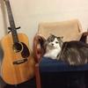 猫とアコギ