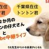 5月31日(日)YouTube中継ライブのお知らせ