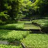 ワサビ好きなら行きたい「Wasabi Journey」@伊豆マリオットホテル修善寺