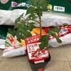 なにから揃える??トマト きゅうり 茄子 プランター栽培