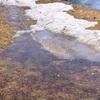 苫小牧西港でナイトロック【春が近いか?クロソイ久々の30UP!】