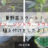 【家庭菜園】夏野菜スタート!ピーマン、シシトウ、トウガラシの植え付けをしたよ!