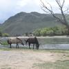 モンゴル旅行記⑲ 結論、モンゴルのノリは向かない