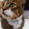 頑張れ猫のミントちゃん|オンライン・ペットヒーリング・動物の身体の悩み