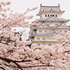 国宝姫路城とサクラを撮る(大阪・神戸・姫路旅行3日目)【2017.04.10】