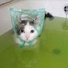 悩んだらひとっ風呂!~『人生はもっとニャンとかなる!』