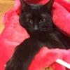 【エムPの昨日夢叶(ゆめかな)】第1051回『こいつは春から縁起がイイ~。たくさんの招き猫がお出迎えしてくれた夢叶なのだ!?』[1月3日]