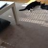 猫とダイソン