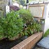 縄文雪つららの水[長岡市脇野町]【新潟県の名水】