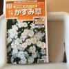 3-34   愛すべき花たち〜2018年夏の花の種蒔き〜