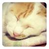 私の猫のような可愛い斜め前髪をセルフカットで作るための覚え書き