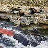 保津川下りの船に揺られ、紅葉を眺めながら癒しの時間を楽しむ