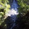 【フジキとヨウラクラン】滝巡り