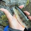 【初心者】渓流でヤマメ釣りに必要な道具とルアーの仕掛けについて伝授