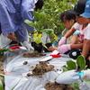 6月18日(日)畑で体験学習! ー夏野菜を植えてきた♡ー