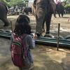 「市原ぞうの国」に行くときは計画的に!象と触れ合い、日本で唯一ぞうに乗れる穴場動物園!
