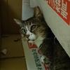4-75   グレコ家猫日記〜隠れるのはお手の物!!〜