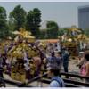 三社祭は今年も盛り上がること間違いなし。見所やアクセス方法を紹介します。