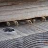 この日のミツバチ達 少しは楽になるかな State of today's bees Might be better a little
