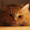 【猫の毛球症】グルーミングのし過ぎは危険信号⁉