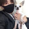 【認知症の愛犬との暮らし】「こたくんの生きたいように生きるのが一番や」という言葉に救われました。