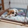 新しい家族~保護犬を迎えるまでの奮闘記