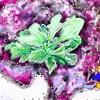 霜の中でも野菜は強く生きる