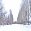 【一日一枚写真】白銀の並木道【一眼レフ】