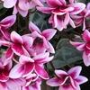 思いやりの花