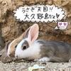 【広島 旅】大人気スポット★900羽のウサギ天国大久野島の楽しみ方【うさぎ島】