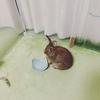 ウサギのご飯をすっかり忘れていた日(動画)