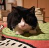 カメラを向けると迫ってくるタイプの猫