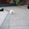 ネコを求めて下町散策 〜谷中の路地訪問〜
