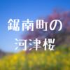千葉県鋸南町の河津桜を撮影!美しすぎて言葉を失った