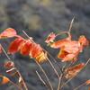 木の葉が落ちてから、芽が出るのではない、下から芽が出る勢いにこらえきれず木の葉は落ちる