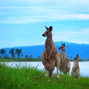 〈公式〉オーストラリア異文化体験研修2017