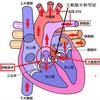 体調がだるくてダウンした名指揮者小澤征爾氏の病は大動脈弁狭窄症