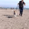 犬を連れて海へ行ってみる