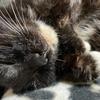 猫との暮らし~闘病 何がベストかは自分が決める~