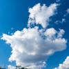 🦜野鳥の回【156】4/19身近な野鳥ハクセキレイ・キセキレイ(他オオルリ)
