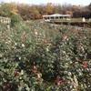 深大寺の紅葉と神代植物園。